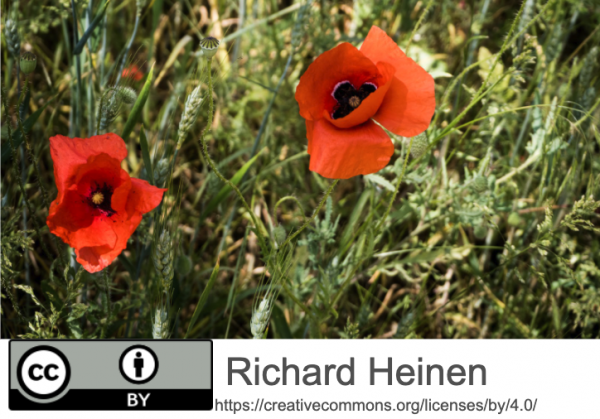 Das Bild zeigt eine Wiese mit zwei Mohnblumen in Nahaufnahme. Am unteren Bildrand ist eine Bauchbinde mit den Urheberrechtshinweisen.