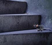 Eine Maus auf einer Treppe