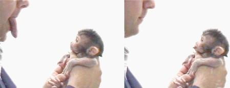 Mensch mit Affe, stecken sich die Zunge heraus
