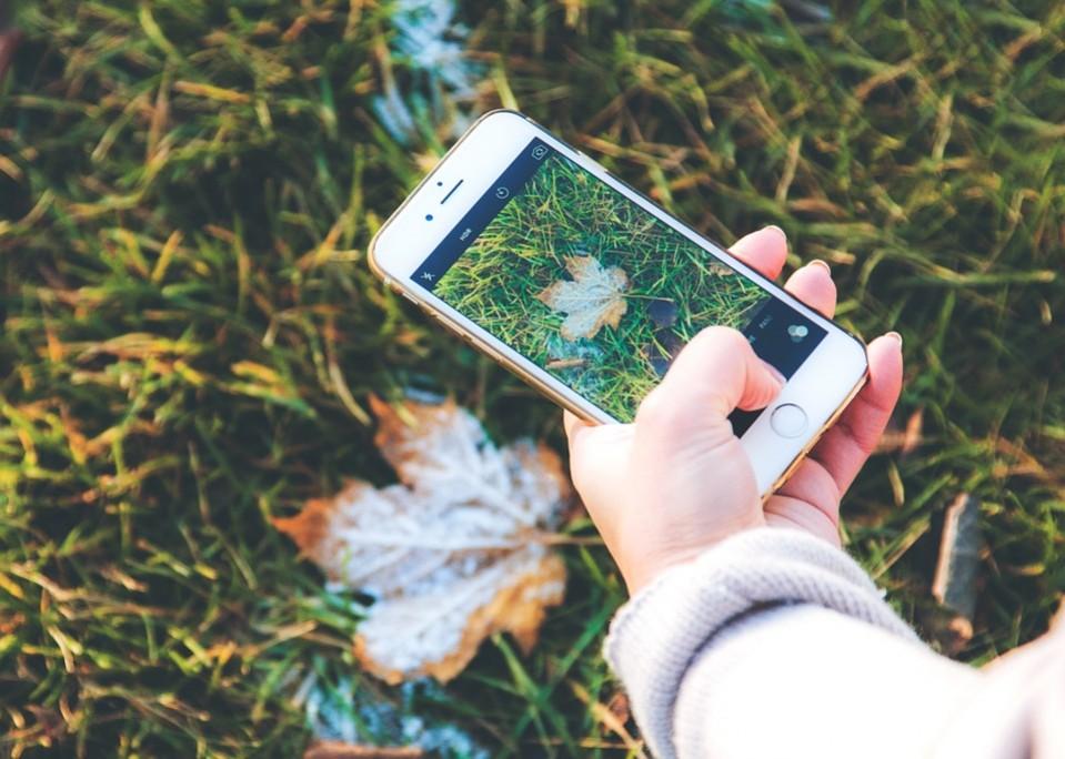 Hand hält Smartphone beim Fotografieren eines Blatts auf der Wiese