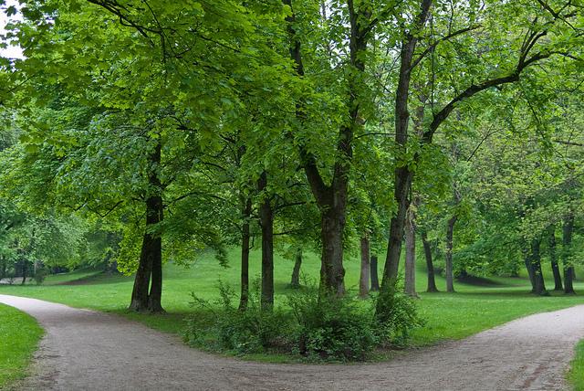 Weggabelung mit Bäumen