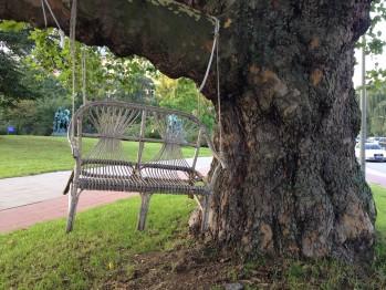 Baum an dem eine Bank aufgehängt wurde