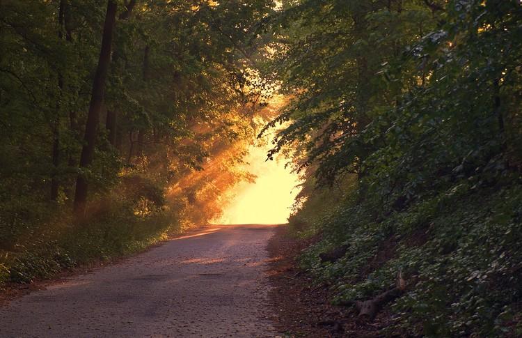 Waldweg mit Sonnenlicht am Ende