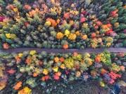 Das Bild zeigt einen Herbstwald aus der Vogelperspektive, Michigan USA.